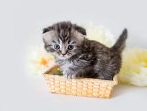 Piccolo bello gattino lanuginoso su un fondo bianco Fotografia Stock