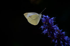 Piccolo bianco Immagini Stock