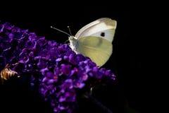 Piccolo bianco Fotografie Stock