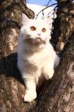 piccolo bianco del gatto Immagini Stock