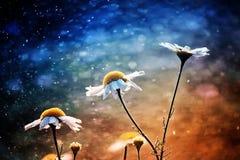 Piccolo, blu, farfalla, insetto, seduta, fiore, fatato, blu, porpora, verde, giallo, fondo, bolle, estate, prato Fotografie Stock