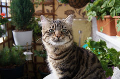 Piccolo Brown Kitten In Flora Immagine Stock Libera da Diritti