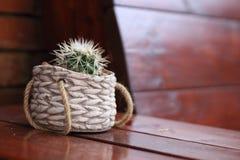 Piccolo cactus Immagine Stock