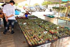 Piccolo cactus da vendere in un mercato della Tailandia Fotografia Stock