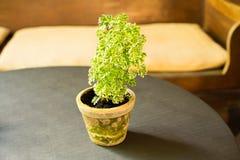 Piccolo cactus e piccola decorazione della casa della pianta ornamentale Fotografia Stock Libera da Diritti