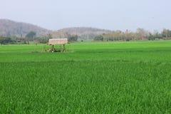 Piccolo campo del riso e della capanna Fotografie Stock Libere da Diritti