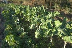 Piccolo campo in pieno delle verdure in azienda agricola organica Fotografia Stock Libera da Diritti