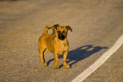 Piccolo cane. Immagini Stock