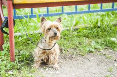Piccolo cane Immagine Stock Libera da Diritti