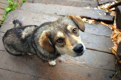 Piccolo cane adorabile Fotografie Stock Libere da Diritti
