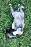 Piccolo cane allegro fotografia stock