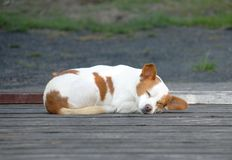 Piccolo cane che dorme su una strada Immagini Stock Libere da Diritti