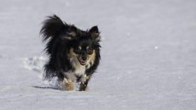 Piccolo cane che funziona nella neve Fotografie Stock Libere da Diritti