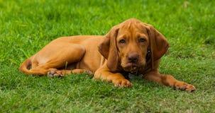 Piccolo cane che guarda a me dal cortile fotografia stock