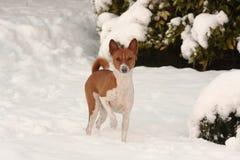 Piccolo cane con i fiocchi di neve sul suo radiatore anteriore Fotografia Stock