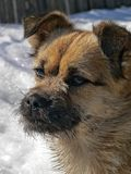 Piccolo cane con la piccola barba 2 Fotografia Stock Libera da Diritti