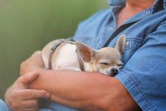Piccolo cane ed uomo Fotografia Stock Libera da Diritti