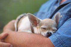 Piccolo cane ed uomo Immagini Stock Libere da Diritti