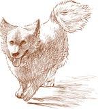 Piccolo cane lanuginoso illustrazione di stock