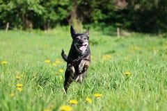 Piccolo cane misto corrente nel parco immagine stock libera da diritti