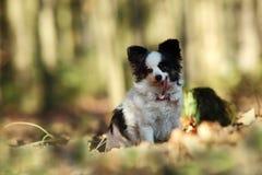 Piccolo cane nel legno Fotografie Stock Libere da Diritti