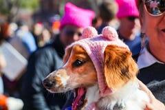 Piccolo cane nello sbadiglio purulento rosa del cappello circondato dalla gente in cappelli purulenti al marzo delle donne a Tuls Fotografia Stock