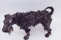 Piccolo cane nero che ha un bagno fotografia stock