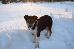 Piccolo cane su neve Immagini Stock Libere da Diritti