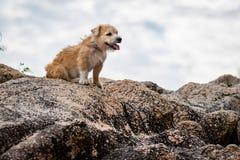Piccolo cane sulla collina Immagine Stock
