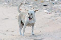 Piccolo cane sulla spiaggia sporca per il concetto di idea di inquinamento immagini stock