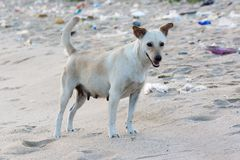 Piccolo cane sulla spiaggia sporca per il concetto di idea di inquinamento Fotografie Stock Libere da Diritti
