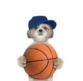 Piccolo cane sveglio in cappuccio che tiene una palla Fotografia Stock