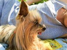 Piccolo cane sveglio che si trova all'aperto con il suo proprietario Immagine Stock