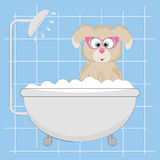 Piccolo cane sveglio nella doccia Immagine Stock