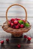 Piccolo canestro dei mirtilli rossi su una tavola di legno immagine stock