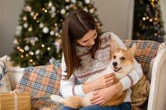 Piccolo cardigan del Corgi di Lingua gallese del cucciolo si trova sullo strato sul rivestimento di una ragazza immagini stock libere da diritti