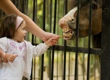 piccolo cavallino della ragazza Immagini Stock Libere da Diritti