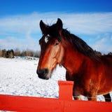 Piccolo cavallo rosso fotografia stock libera da diritti