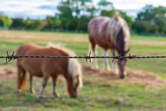Piccolo cavallo sulla prateria fotografia stock