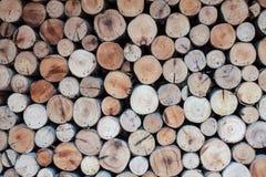 Piccolo cerchio di legno dell'eucalyptus della parete fotografia stock libera da diritti