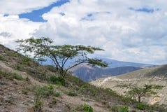 Piccolo cespuglio dell'albero sul pendio delle Ande l'ecuador Franco non lontano Immagini Stock Libere da Diritti