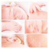 Piccolo collage della foto del bambino Fotografia Stock