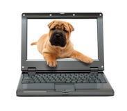 Piccolo computer portatile con il cane di cucciolo Immagini Stock Libere da Diritti