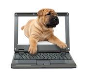 Piccolo computer portatile con il cane di cucciolo Fotografia Stock Libera da Diritti