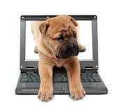 Piccolo computer portatile con il cane di cucciolo Fotografie Stock
