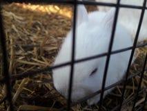 Piccolo coniglietto fotografia stock