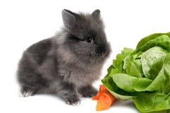 Piccolo coniglietto nero su priorità bassa bianca Fotografia Stock Libera da Diritti