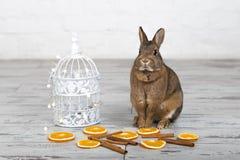 Piccolo coniglietto sveglio che si siede vicino al birdcage fotografia stock