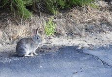 Piccolo coniglietto sveglio fuori in natura Fotografia Stock