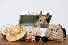 Piccolo coniglio Fotografia Stock